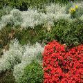Giardino verticale mediterraneo